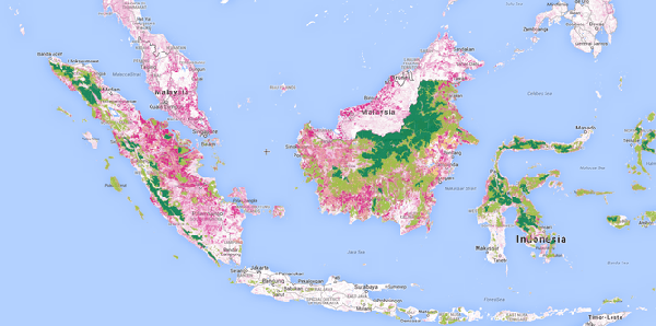 Pink shows forest loss between 2000 and 2013, dark green shows intact forest, light green shows degraded lands, yellow is logged forest and light pink is palm plantations. source: globalforestwatch.org