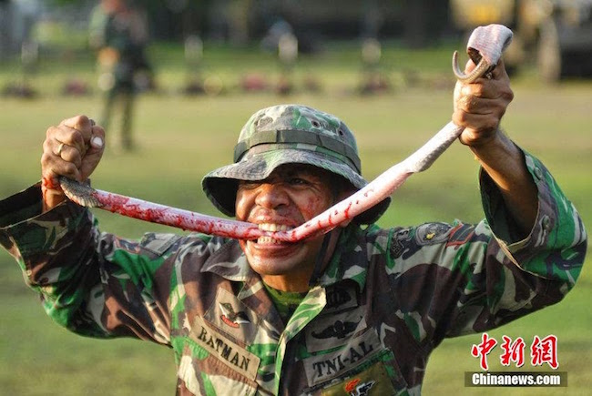 Indonesian Army field training for eating poisonous cobras 1.jpg
