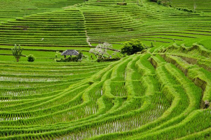 http://www.asiapacificfarmersforum.com/wp-content/uploads/2014/10/travel-indonesia.jpg