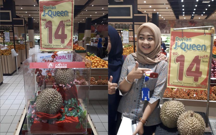 J Queen Durian 14 Million